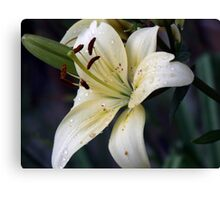 Just because she loves lilies  Canvas Print