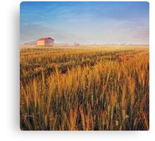 sunrise over misty wheat field Canvas Print