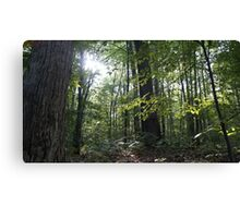 Gleaming Hope in the Forest. Canvas Print