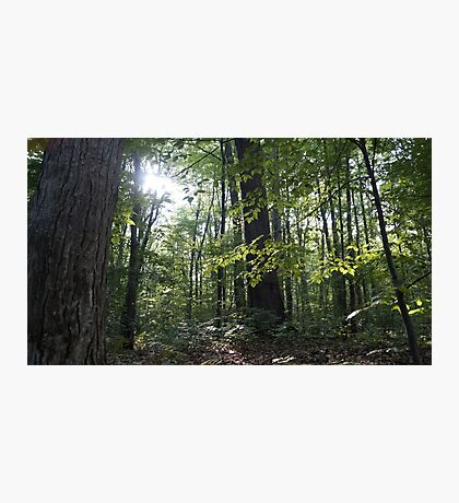 Gleaming Hope in the Forest. Photographic Print