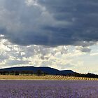 Storm over the cut hay by julie anne  grattan