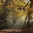 Autumn Sun Rays by TheFotoGraffer