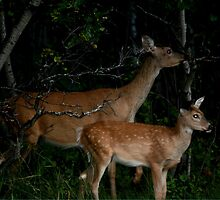 Look What's Lurking in the Woods Tonight!!! by Larry Trupp