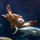 Sea Turtle by imagetj