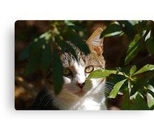 Pretty Cat Canvas Print