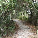 Along The Beaten Path by Dana Yoachum
