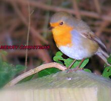 Robin. by Livvy Young