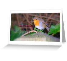 Robin. Greeting Card
