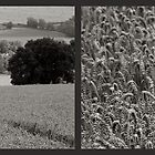 Cotswold Wheat Field Diptych by MarkBigelow