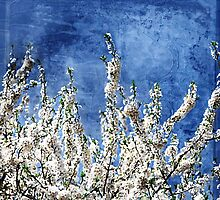 Cherry Blossoms on Blue by Paula Belle Flores