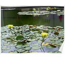 Aquatic flowers Poster