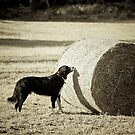 Sniffing the Haystack by Karen Havenaar