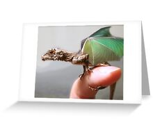 Baby hatchling dragon Greeting Card