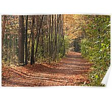 Autumnal Pathway Poster