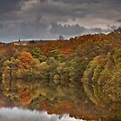 Darwen Tower from an autumnal Roddlesworth wood by Shaun Whiteman