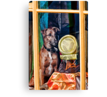 How Much Is That Doggie In the Window? Canvas Print