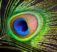 Peacock Heart by Nala