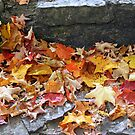 The Leaves Of Autumn by kkphoto1