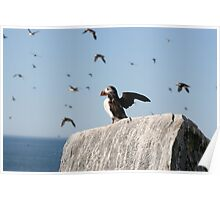 Puffin Takeoff Poster