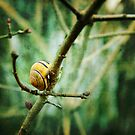Snail by smilyjay