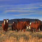 I Dreamed A Dream That All Wild Horses Were Living Free  by Jeanne  Nations