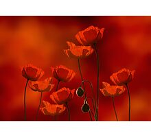 field of poppy Photographic Print