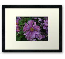 Purple Grace Framed Print