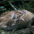 Deer fawn by intensivelight