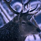 Portrait of a stag by intensivelight