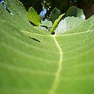 Fig leaf detail by Chanzz