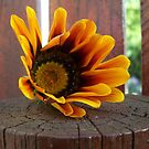Orange fallen flower by Chanzz