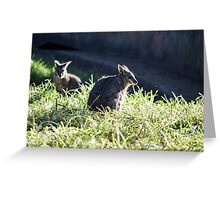 Baby Wallaby are beautiful Greeting Card