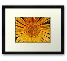 Raindrops on Gerbera Framed Print