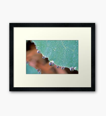 Cabbage Dew Drops Framed Print