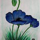 Poppies in Blue - Blou Papawers by Mariaan M Krog Fine Art Portfolio