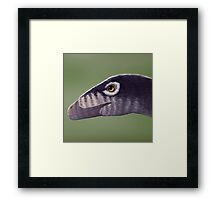 Troodon Framed Print
