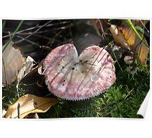 Pink Fungi Poster