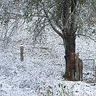 Star enjoying the snow by Misty Lackey