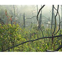 Spider Web Community Photographic Print
