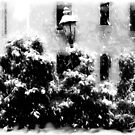 Let It Snow!!!  ©  by Dawn Becker