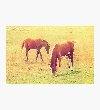 Walk through the meadow Photographic Print