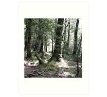Sylvan Forest - New Zealand Art Print