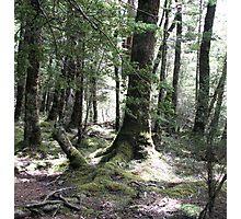 Sylvan Forest - New Zealand Photographic Print