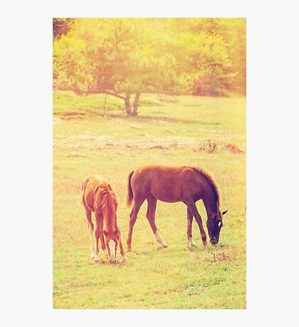 Young horses Photographic Print