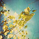 Golden Wonder by Claire Penn