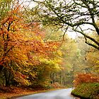 Road into Autumn by mikebov