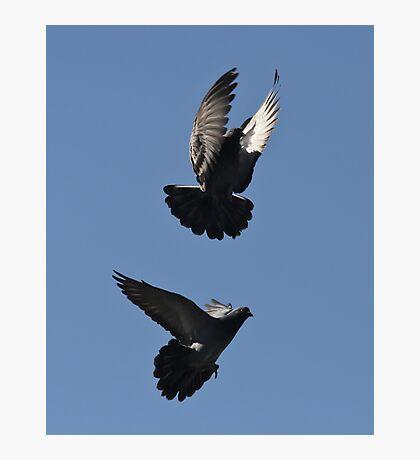 The Pigeon Dance Photographic Print