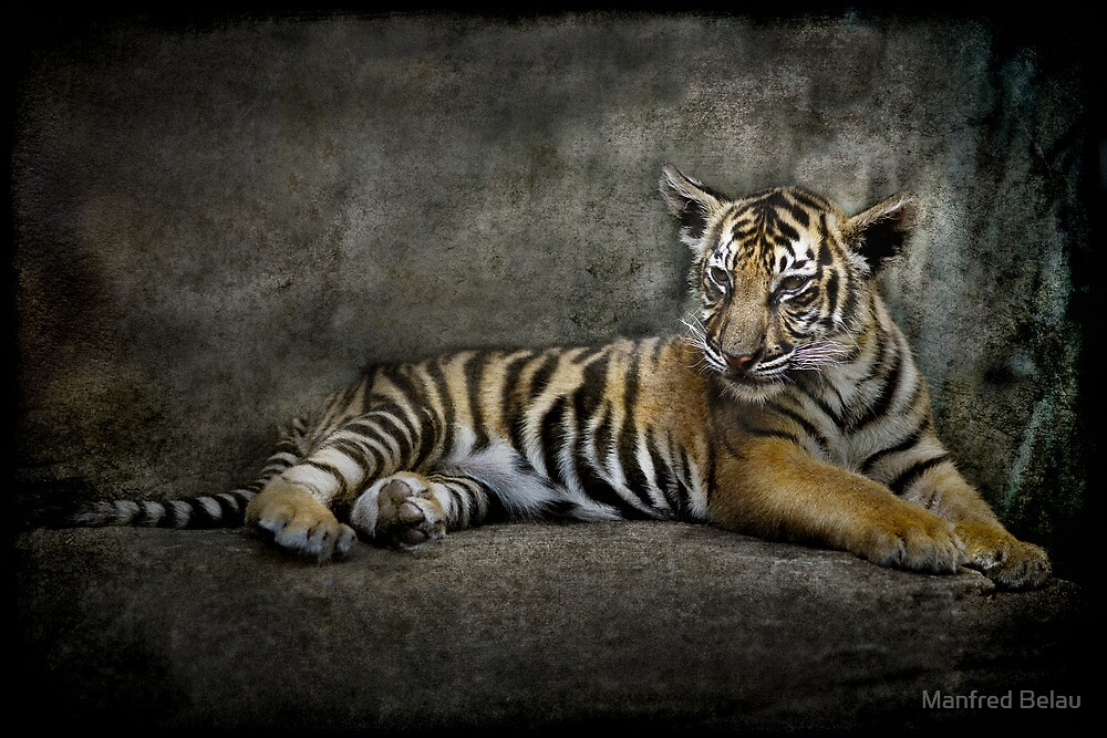 Magnificent Young Beast 1 by Manfred Belau