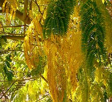 Mimosa leaves by Shulie1