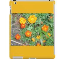 Marigolds  in full bloom iPad Case/Skin
